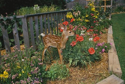 Deer-garden