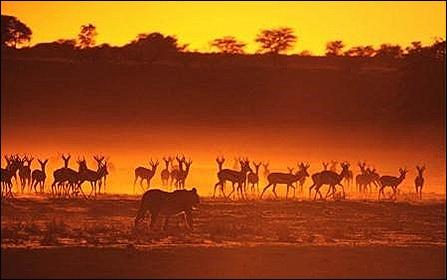 1st safari foto for Origins of Species